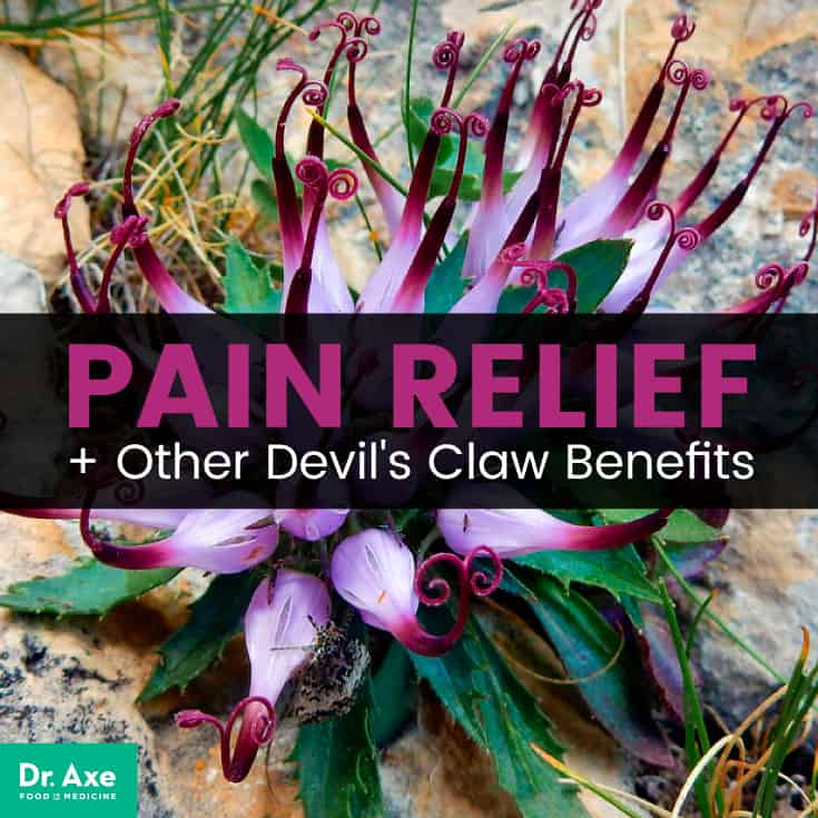 Devils claw benefits - Dr. Axe