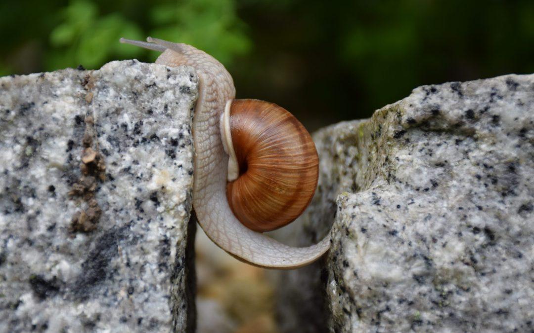 Image of snail between rocks