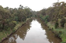 Looking east up the Yarra adjacent to Lenister Farm Wetlands.
