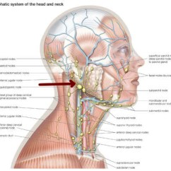 Where Are My Lymph Nodes Diagram Iron Carbon Phase Explanation Under Chin 19 Stromoeko De Wiring Rh 29 Malibustixx Anatomy Glands