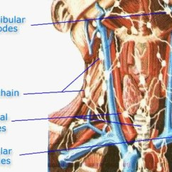 Where Are My Lymph Nodes Diagram Three Port Valve Wiring In The Neck Still Another Of Area