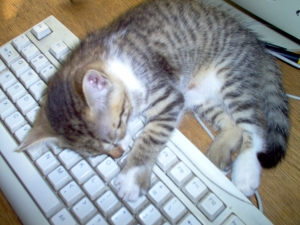 gato-en-un-teclado--cat-on-a-keyboard-1430977-m