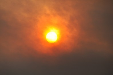 Forest Fire at Noon