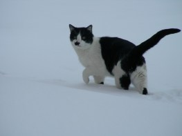 Sly in Snow Storm