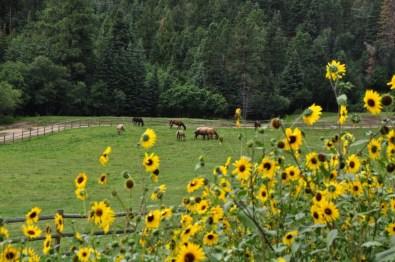 Peaceful Colorado Ranch