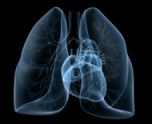 heart-and-lungs-190x155