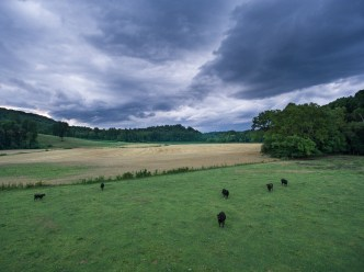Stormy skies over a cow pasture
