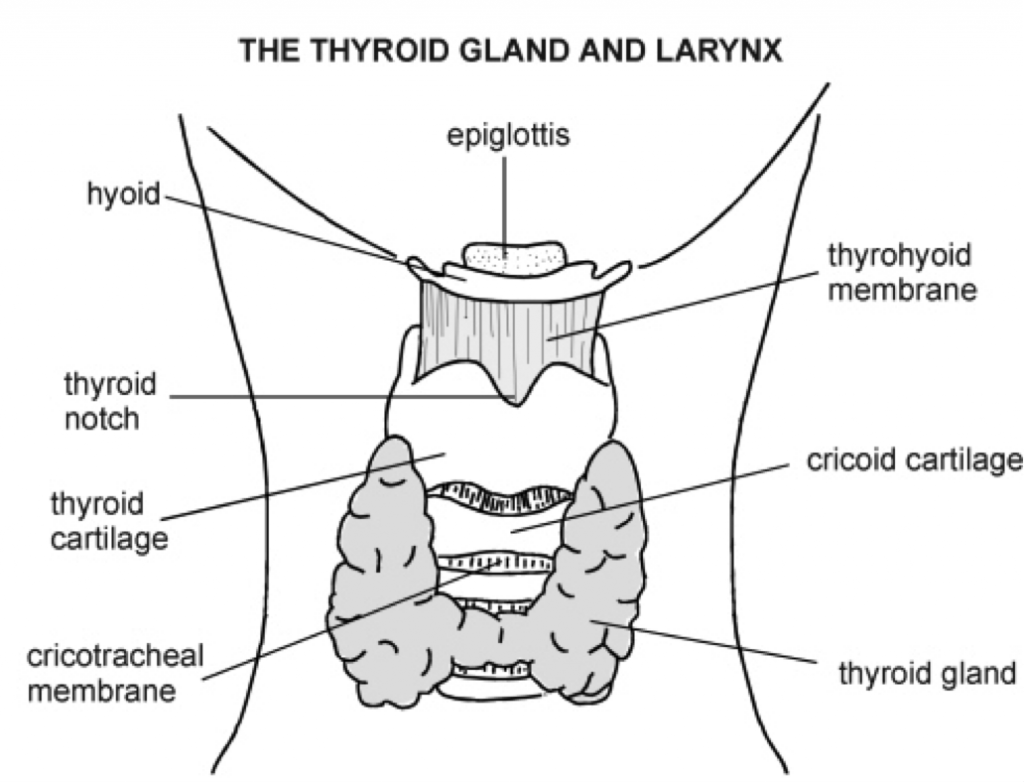 thyroid and larynx anatomy diagram kicker l7 wiring 4 ohm testing your the definitive guide to optimal