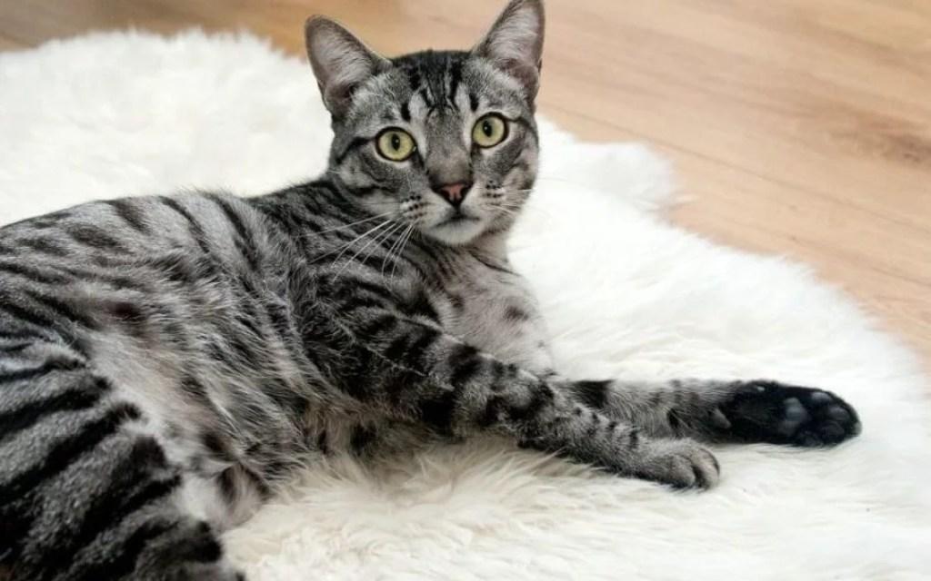 cat-468232_1280-min-1080x675