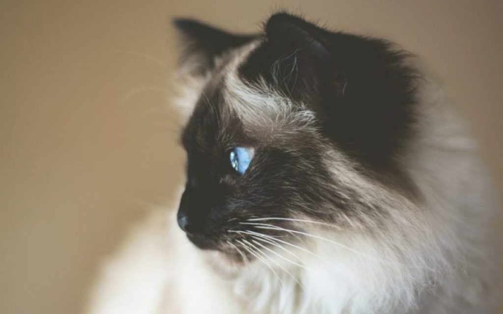 cat2-1080x675