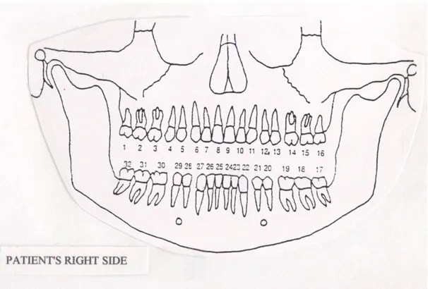 tooth numbering diagram pdf number and name describe the
