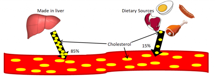 picture depicting sources of cholesterol which include the liver and diet