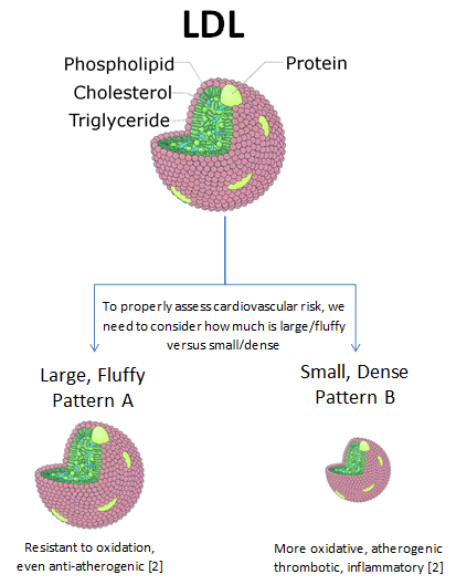 raft depicting cholesterol and liporproteins