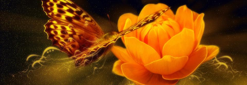 Bowen Therapy | Dr. Denise Rochon
