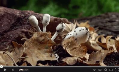 Fantastic-Fungi--The-Spirit-of-Good
