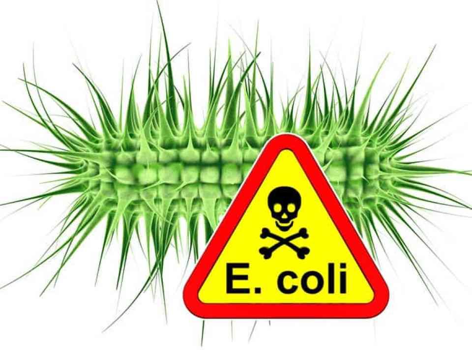Image result for e coli