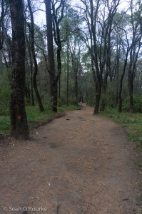 Hikers' trail through trees