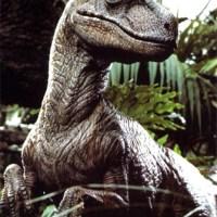 Allosaurus vs Raptor