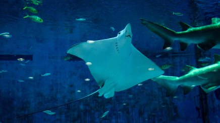 stingray-under-water-2832643