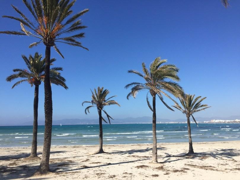 Palmen am Strand von El Arenal auf Mallorca.