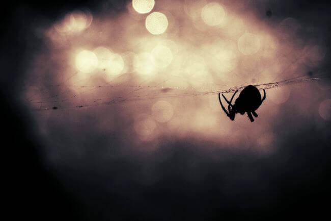 animal-silhouette-bokeh-insect-large