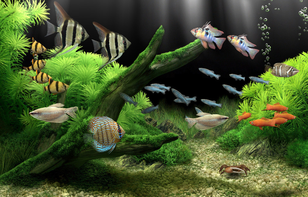 virtual aquarium for your pc or mac