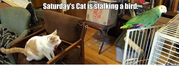 6. Saturday's Cat