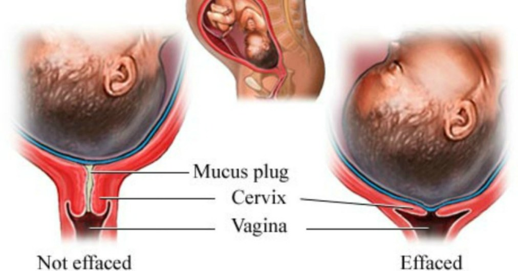 Its your body, your cervix, and you can do your own cervical check
