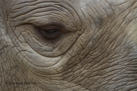 Into the Eye of A Rhinoceros