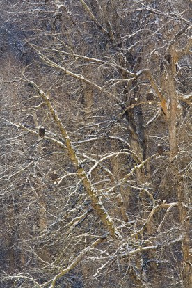 Tree Patterns with Eagles