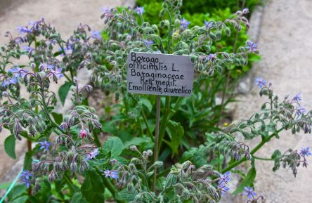 Photo of medicinal plants being grown at Padua's centuries old botanical gardens