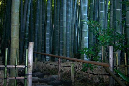 A bamboo garden near Tokyo