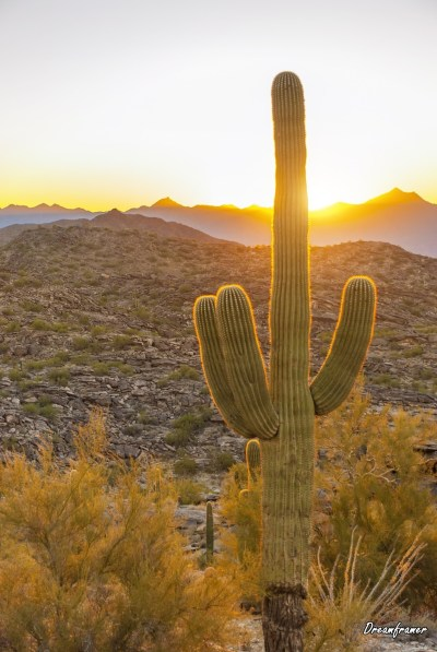 Saguaro in Sunset - ©Dreamframer