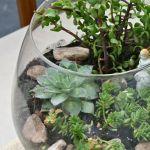 Pinspiration Monday Diy Fish Bowl Terrarium Dream Green Diy