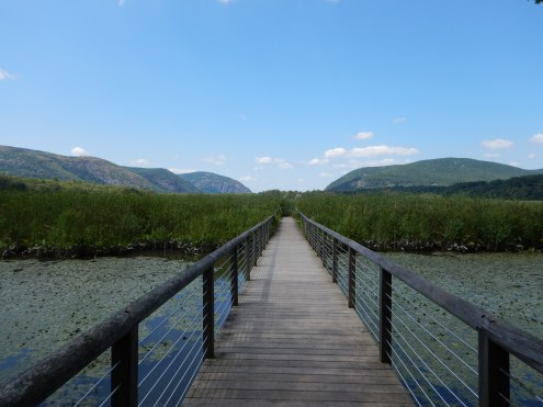 Constitution Marsh in Cold Spring, NY. A series of docks and bridges let you walk out on the marsh!