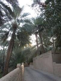 Al Ain Oasis 1