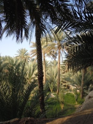 Al Ain Oasis 13