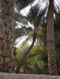Al Ain Oasis 16