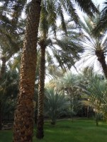 Al Ain Oasis 17