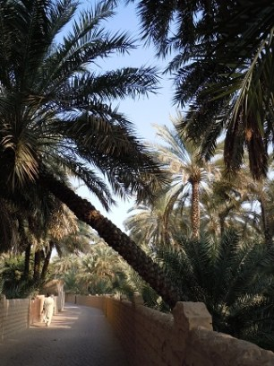 Al Ain Oasis 19