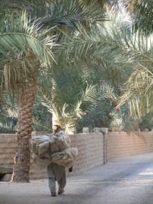 Al Ain Oasis 21