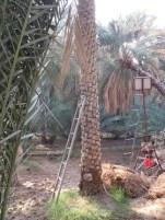 Al Ain Oasis 22