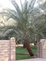 Al Ain Oasis 23