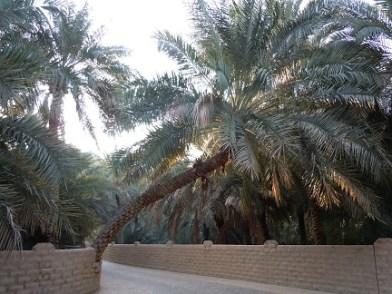 Al Ain Oasis 3