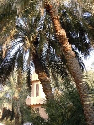Al Ain Oasis 7