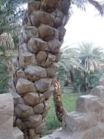 Al Ain Oasis 9