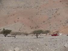 Wadi Ghalilah 23
