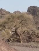 Wadi Kub 16