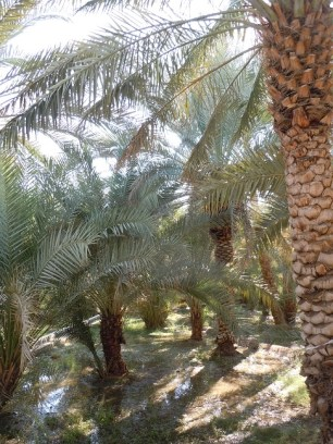 Hili Oasis 14