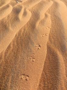 Footprints 10